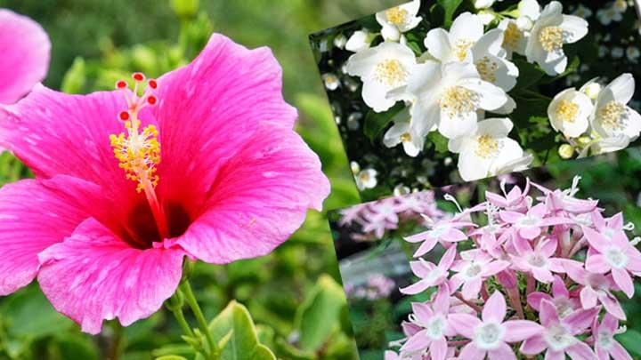 2. Koropak.co.id - Aneka Bunga yang Cocok Untuk Eksterior Hunian