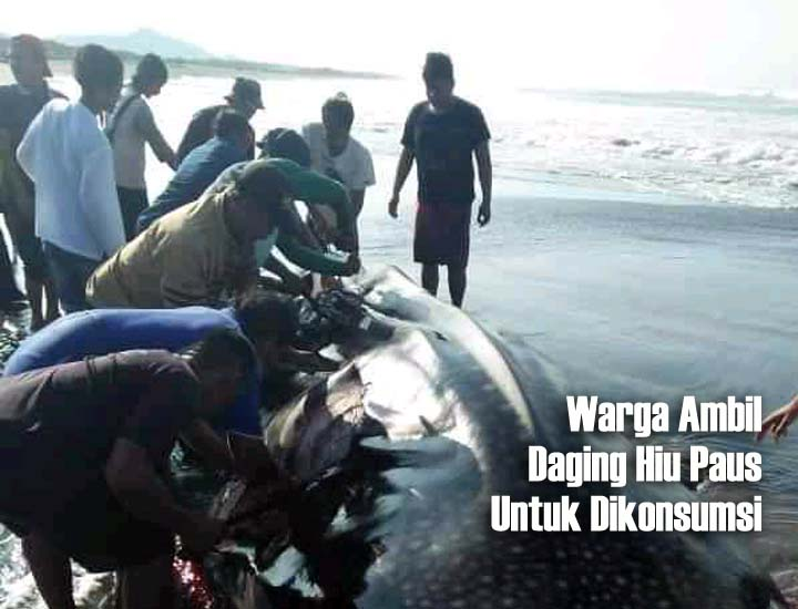 Koropak.co.id - Fakta-Fakta Tentang Hiu Paus yang Terdampar di Pantai Selatan Tasikmalaya