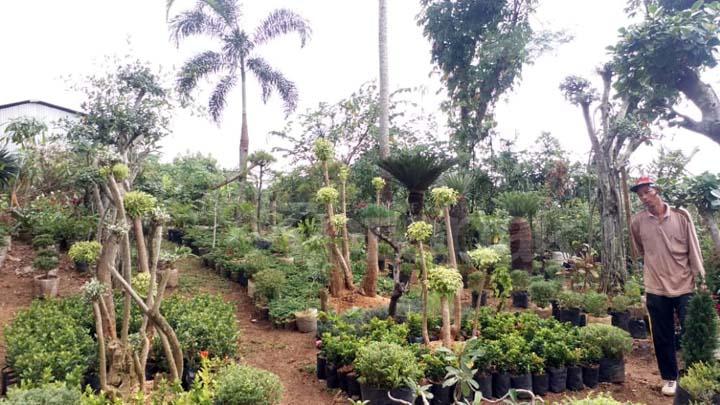 Koropak.co.id - Gisya Florist, Toko Tanaman Hias di Tasikmalaya Dengan Koleksi Lengkap