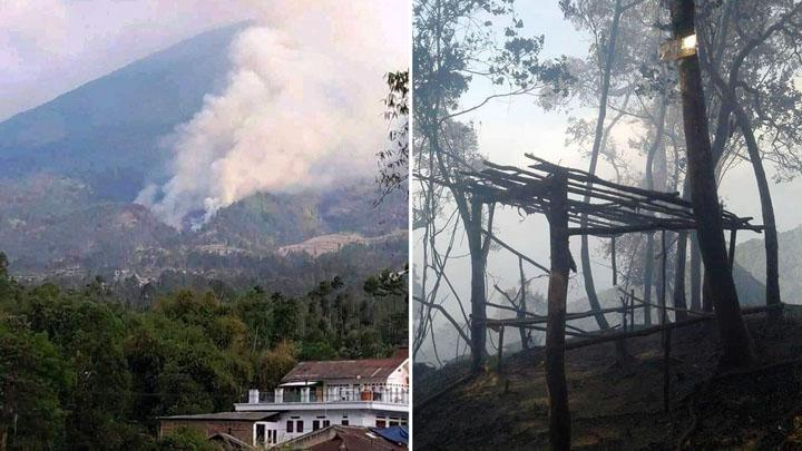 Koropak.co.id - Kawasan Hutan Gunung Cikuray Garut Terbakar