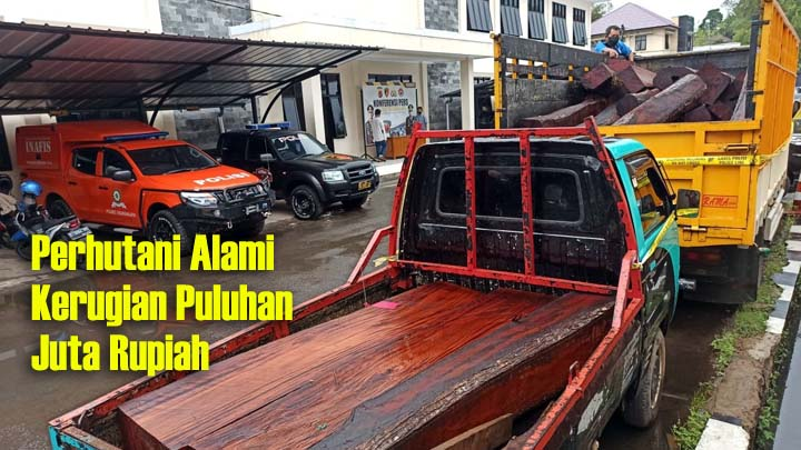 Koropak.co.id - Tangkap Pencuri Kayu, Polisi Sita Puluhan Batang Kayu Siap Jual